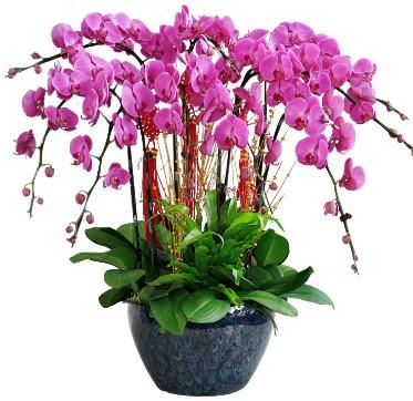 9 dallı mor orkide  Manisa çiçek satışı
