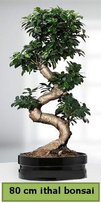 80 cm özel saksıda bonsai bitkisi  Manisa anneler günü çiçek yolla
