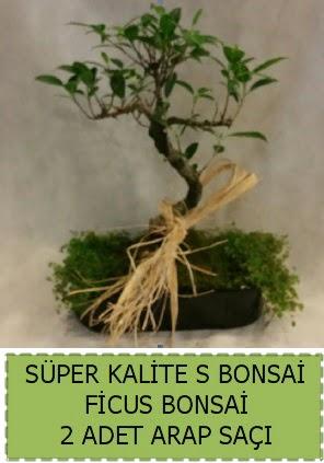 Ficus S Bonsai ve arap saçı  Manisa anneler günü çiçek yolla