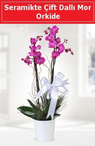 Seramikte Çift Dallı Mor Orkide  Manisa çiçek , çiçekçi , çiçekçilik