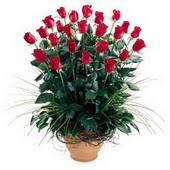 Manisa çiçekçi telefonları  10 adet kirmizi gül cam yada mika vazo