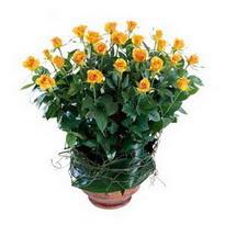 Manisa çiçek gönderme  10 adet sari gül tanzim cam yada mika vazoda çiçek