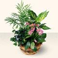 Manisa hediye sevgilime hediye çiçek  5 adet canli çiçek sepette