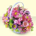 Manisa internetten çiçek siparişi  bir sepet dolusu kir çiçegi  Manisa cicekciler , cicek siparisi