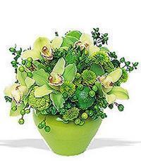 cam yada mika vazoda 5 adet orkide   Manisa çiçek siparişi vermek