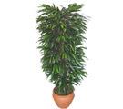 Manisa güvenli kaliteli hızlı çiçek  Özel Mango 1,75 cm yüksekliginde