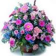 karisik mevsim kir çiçekleri  Manisa cicekciler , cicek siparisi