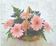 gerbera çiçeklerinde sepet   Manisa uluslararası çiçek gönderme