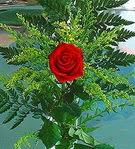 1 adet kirmizi gül buketi   Manisa İnternetten çiçek siparişi
