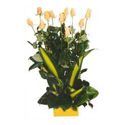 12 adet beyaz gül aranjmani  Manisa internetten çiçek satışı