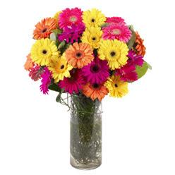 KARISIK GERBERALARDAN CAM VAZO TANZIMI  Manisa çiçekçiler