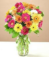 Manisa hediye çiçek yolla  17 adet karisik gerbera