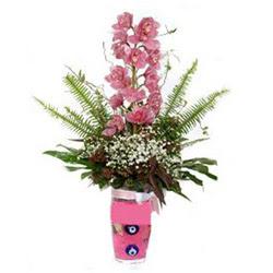 Manisa çiçek mağazası , çiçekçi adresleri  cam yada mika vazo içerisinde tek dal orkide çiçegi
