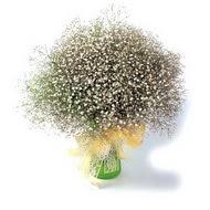 Manisa çiçek siparişi sitesi  cam yada mika vazo içerisinde cipsofilya demeti