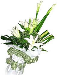 Manisa çiçekçiler  3 dal kazablanka çiçegi ve yesillikler