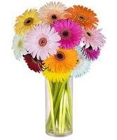 Manisa çiçek yolla , çiçek gönder , çiçekçi   Farkli renklerde 15 adet gerbera çiçegi