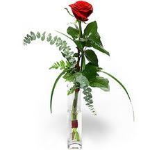 Manisa çiçek satışı  Sana deger veriyorum bir adet gül cam yada mika vazoda