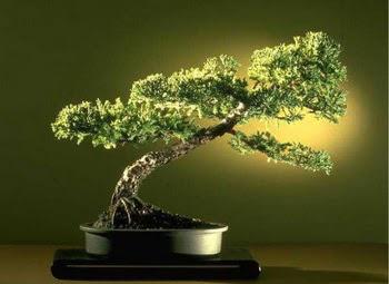 ithal bonsai saksi çiçegi  Manisa kaliteli taze ve ucuz çiçekler
