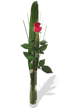 1 adet cam vazo içerisinde kirmizi gül  Manisa çiçek online çiçek siparişi