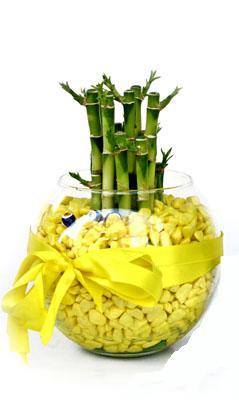 cam fanus içerisinde bambo  Manisa yurtiçi ve yurtdışı çiçek siparişi