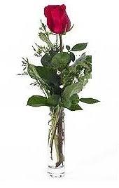 Vazo içerisinde 1 adet kirmizi gül  Manisa çiçek gönderme