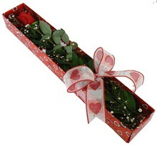 Tek kirmizi gül kutu içerisinde  Manisa çiçekçiler