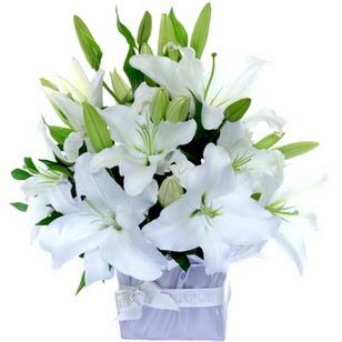Manisa uluslararası çiçek gönderme  2 dal cazablanca vazo çiçeği
