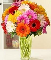 Manisa çiçekçi mağazası  15 adet gerbera çiçek vazosu