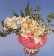 Manisa çiçek siparişi sitesi  Dal orkide kalite bir hediye