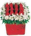 Manisa 14 şubat sevgililer günü çiçek  Kare cam yada mika içinde kirmizi güller - anneler günü seçimi özel çiçek