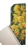 Manisa 14 şubat sevgililer günü çiçek  Kutu içerisine dal cymbidium orkide