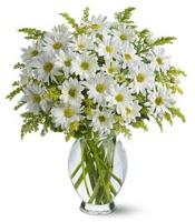 Vazo içerisinde beyaz krizantem çiçekleri  Manisa kaliteli taze ve ucuz çiçekler