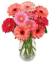 vazo içerisinde 13 adet gerbera çiçeği  Manisa güvenli kaliteli hızlı çiçek