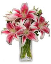Vazo içerisinde 5 dal kazablanka çiçeği  Manisa çiçek gönderme