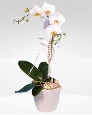 1 dallı orkide saksı çiçeği  Manisa çiçek siparişi vermek