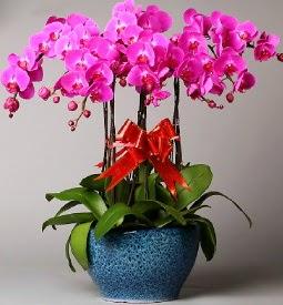 7 dallı mor orkide  Manisa hediye çiçek yolla