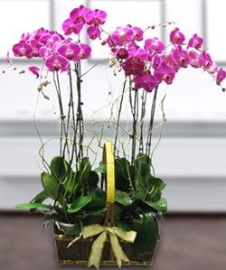 4 dallı mor orkide  Manisa çiçekçiler