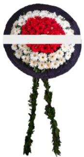 mozele çiçeği  Manisa ucuz çiçek gönder