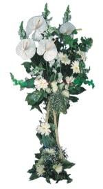 Manisa çiçek siparişi sitesi  antoryumlarin büyüsü özel