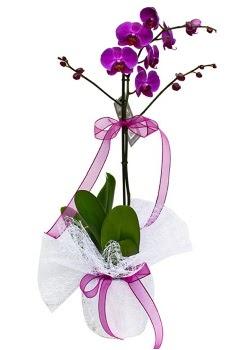 Tek dallı mor orkide  Manisa anneler günü çiçek yolla
