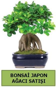 Bonsai japon ağacı satışı  Manisa hediye sevgilime hediye çiçek