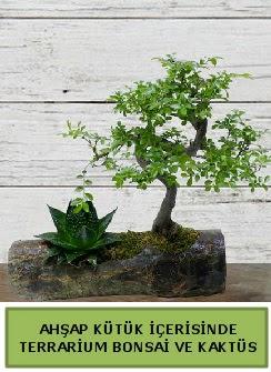 Ahşap kütük bonsai kaktüs teraryum  Manisa çiçek yolla , çiçek gönder , çiçekçi