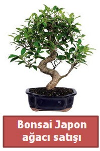 Japon ağacı bonsai satışı  Manisa güvenli kaliteli hızlı çiçek