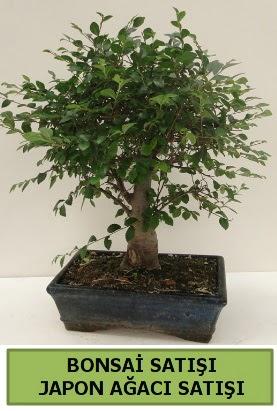 Minyatür bonsai japon ağacı satışı  Manisa cicekciler , cicek siparisi