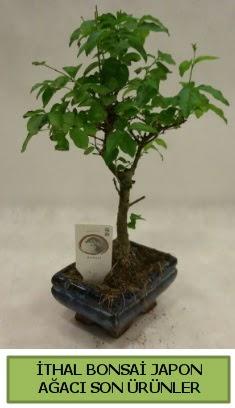 İthal bonsai japon ağacı bitkisi  Manisa ucuz çiçek gönder