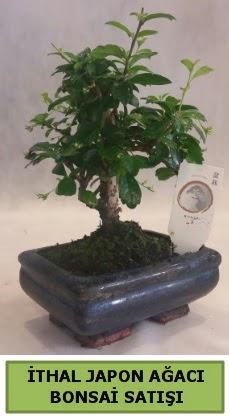İthal japon ağacı bonsai bitkisi satışı  Manisa anneler günü çiçek yolla