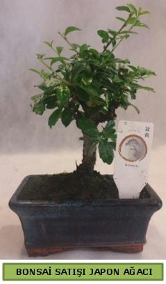 Minyatür bonsai ağacı satışı  Manisa 14 şubat sevgililer günü çiçek