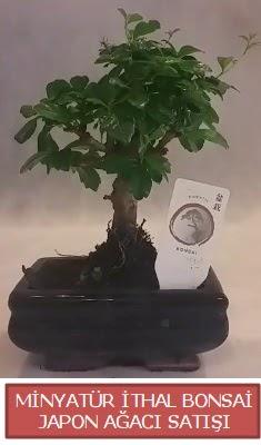 Küçük görsel bonsai japon ağacı bitkisi  Manisa çiçek online çiçek siparişi