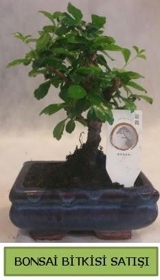 Bonsai ithal görsel minyatür japon ağacı  Manisa çiçek servisi , çiçekçi adresleri