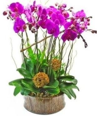 Ahşap kütükte lila mor orkide 8 li  Manisa yurtiçi ve yurtdışı çiçek siparişi